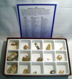 Fossil Set General 15 specimens + key